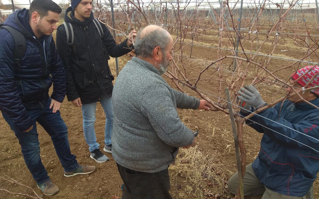 Action learning in vineyard pruning…